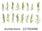 rosemary isolated on white... | Shutterstock . vector #227403088