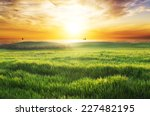 Stock photo field with green grass against the sunset sky 227482195