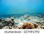 school of scad fish in dimakya... | Shutterstock . vector #227491792