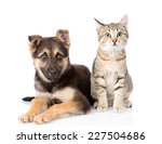 Stock photo cat and dog sitting in front isolated on white background 227504686