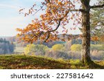 Oak tree with orange autumn leaves with colorful forest in background - stock photo