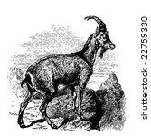 goat. vector. | Shutterstock .eps vector #22759330