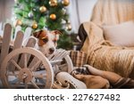 Stock photo jack russell dog at the christmas tree 227627482