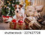 Jack Russell Dog At The...