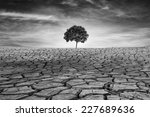 tree on drought cracked desert... | Shutterstock . vector #227689636