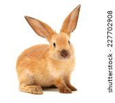 Stock photo rabbits isolated on white background 227702908