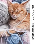 Stock photo kitten next to a ball of yarn 227732785