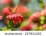 A Butterfly Landed On Flower I...