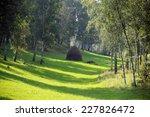 beautiful summer landscape... | Shutterstock . vector #227826472