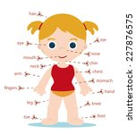 girl body parts chart for school | Shutterstock .eps vector #227876575