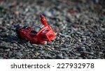 red tin robot fallen on rocks | Shutterstock . vector #227932978