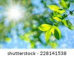bright spring natural background | Shutterstock . vector #228141538