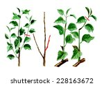 the formation of the young tree ... | Shutterstock . vector #228163672
