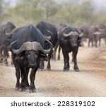 buffalo in the way  standing on ... | Shutterstock . vector #228319102