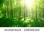 green forest background in a... | Shutterstock . vector #228340165