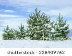 christmas trees in winter forest | Shutterstock . vector #228409762