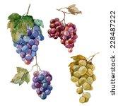 Grapes  Watercolor  Bunch