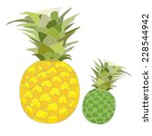 ripe and raw pineapple vector...   Shutterstock .eps vector #228544942