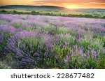 meadow of lavender. nature... | Shutterstock . vector #228677482