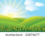 Daffodil Field  Vector