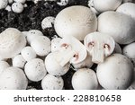 Mushrooms   Champignons...