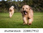 Stock photo dogs playing together 228817912