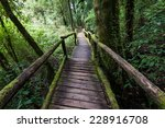passage in doi inthanon... | Shutterstock . vector #228916708