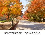 the colors of autumn in korea | Shutterstock . vector #228952786