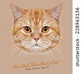 Stock vector vector portrait of domestic cat orange british short hair cat with copper eyes 228963136