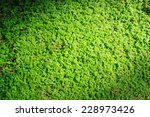 Green Moss For Background