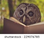 an owl animal with glasses is... | Shutterstock . vector #229076785