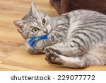 Stock photo bengal cat playing with a blue fluffy toy 229077772