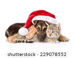 Stock photo cat and dog with santa claus hat isolated on white background 229078552