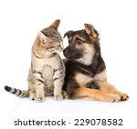 Stock photo dog and cat looking at each other isolated on white background 229078582