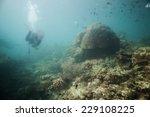 scuba divers swim over coral... | Shutterstock . vector #229108225
