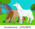 three horses among the meadow   Shutterstock . vector #22923859