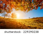 colorful autumn landscape.... | Shutterstock . vector #229290238