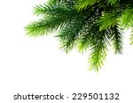 christmas tree isolated on the... | Shutterstock . vector #229501132