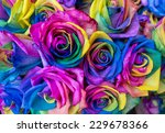 Stock photo bouquet of colored roses rainbow roses with multicoloured petals 229678366