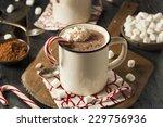 homemade peppermint hot... | Shutterstock . vector #229756936