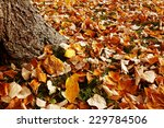 leaves in autumn | Shutterstock . vector #229784506