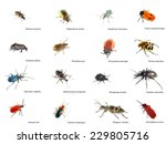Collection Of Different Beetle...