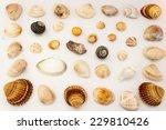 sea shells photographed on floor | Shutterstock . vector #229810426