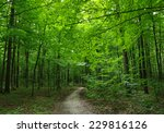 path in the green forest | Shutterstock . vector #229816126