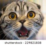 Stock photo funny cat 229821838