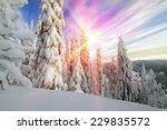 Snow In The Beautiful Wild Fir...