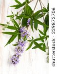 Small photo of healing plants: Chasteberry (Vitex agnus castus) - cutout on board
