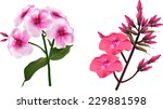 illustration with pink flower... | Shutterstock .eps vector #229881598
