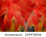 Exotic Red Background Texture...