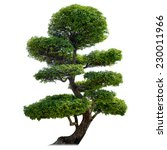 green bonsai tree isolated on... | Shutterstock . vector #230011966